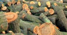 26 акта за нарушения на Закона за горите са съставили горските инспектори при РДГ – София през изминалата седмица