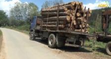 Инспектори от РДГ – София съставиха 11 акта за незаконна сеч