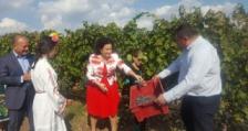Десислава Танева: Около 160 млн. литра вино ще бъде произведено тази година в страната