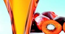 Ново изследване показва значението на палмовото масло за световната икономика