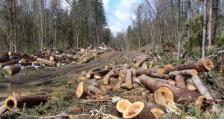 900 незаконно отсечени дървета установиха горските инспектори от РДГ Пазарджик