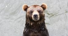 МОСВ раздаде над 300 комплекта електропастири в районите с най-голяма популация на кафява мечка