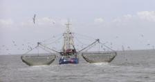 Забрана за претоварване в открито море, предлагат изследователи