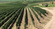 Помощ за гроздопроизводителите от Агрия