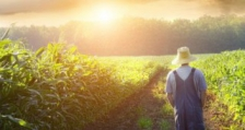 Прецизират се текстове в Закона за подпомагане на земеделските производители
