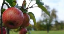 Производството на плодове и зеленчуци да стане с обратно начисляване на ДДС