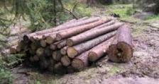 23 кубика дървесина са задържали служители на ИАГ