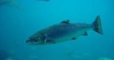 Световен ден на мигриращите риби
