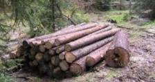 Над 35 кубика незаконна дървесина са задържали служителите при РДГ – Велико Търново