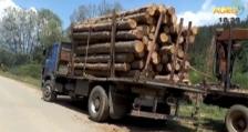 Горски инспектори задържаха 7 лица и 4 товарни автомобила с незаконна дървесина