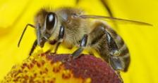 БАБ подкрепя исканията на българските пчелари