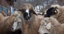 Правителството одобри промени в Закона за животновъдството