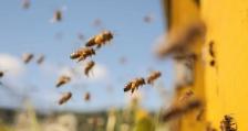 ЕК одобри Националната програма по пчеларство за периода 2020-2022 г.