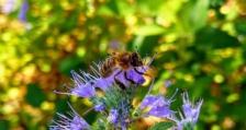 Масово измиране на пчелни семейства във Врачанско