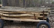 Служителите на РДГ Берковица задържаха нарушители, транспортиращи незаконна дървесина