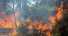 Да внимаваме за пожари - следствие от жегите