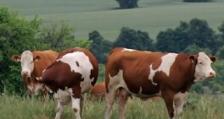 26,3 млн. лева de minimis получават животновъдите