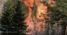 Пожарите в Калифорния струват 13 млрд. долара